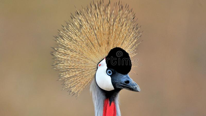 坦桑尼亚的鸟 库存图片
