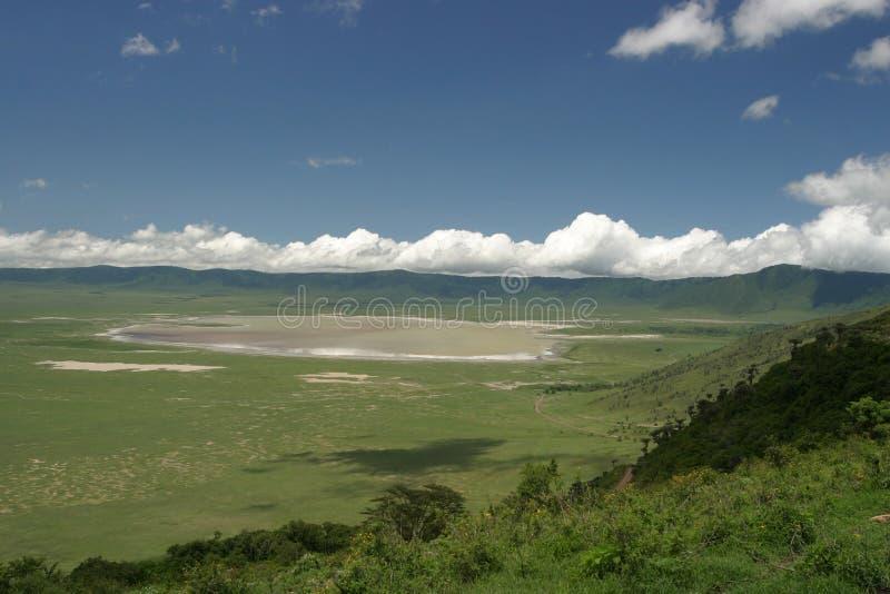 坦桑尼亚野生生物 免版税库存照片