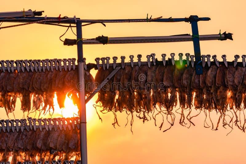 垂悬与在线的夹子的干乌贼反对日落天空 街道食物在泰国 可口干海鲜 干乌贼 库存照片