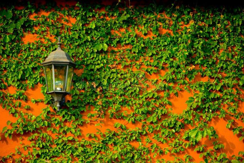 垂悬与常春藤的葡萄酒电灯笼灯在橙色concret 库存图片
