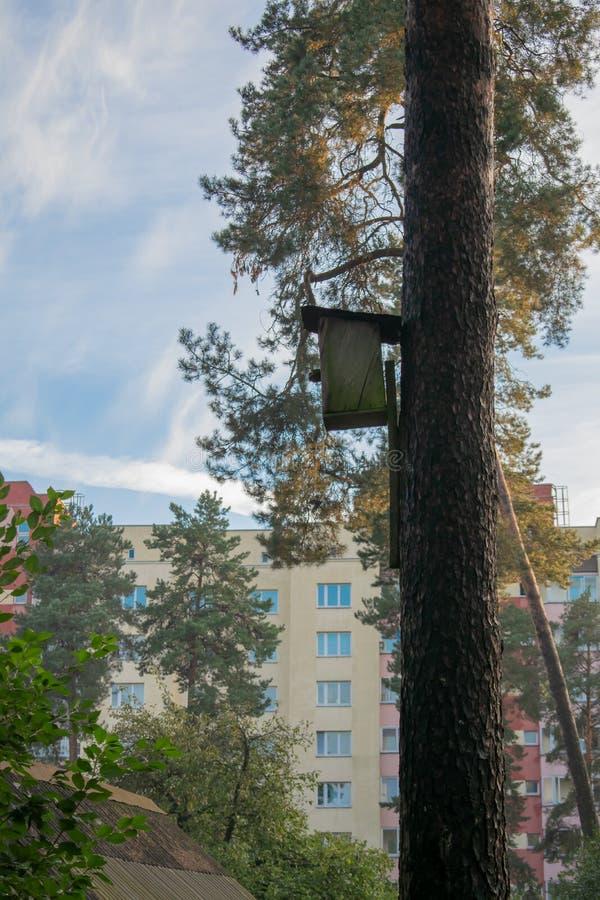 垂悬从与入口孔的树的鸟房子以圈子的形式 库存照片