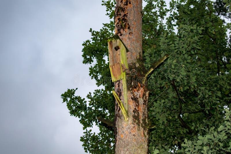 垂悬从与入口孔的树的鸟房子以圈子的形式 免版税库存照片