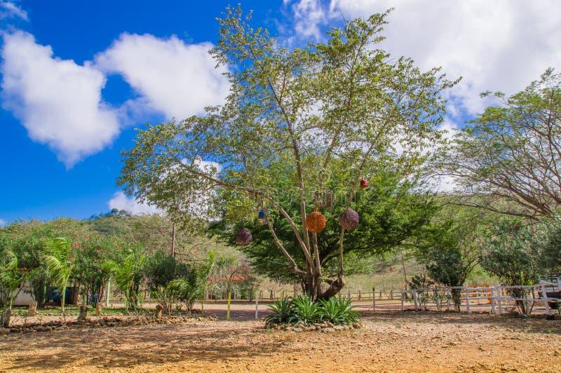 垂悬从在加勒比海滩的一棵巨大的树的灯笼美好的室外看法,在一个华美的蓝天和晴天 库存照片