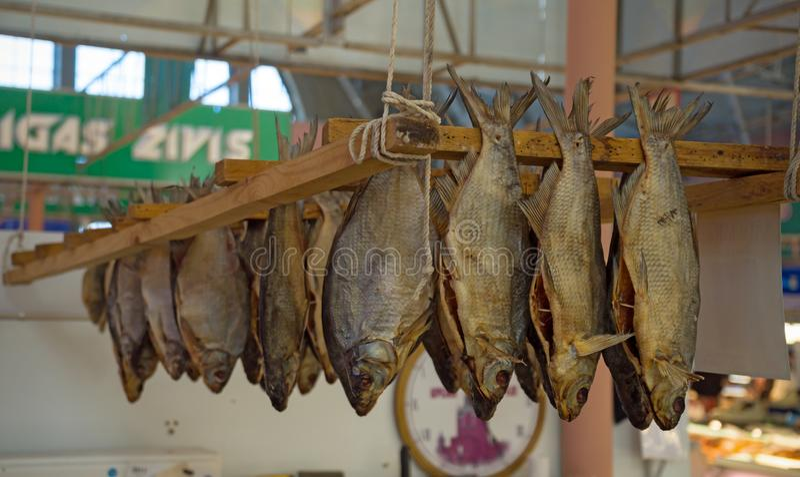垂悬和烘干待售,传统啤酒快餐的干咸鱼vobla 免版税图库摄影