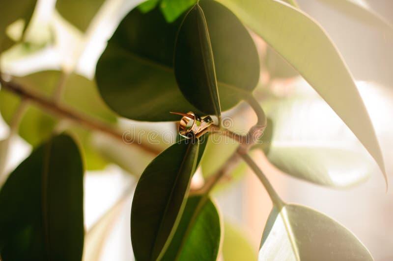 垂悬在一个绿色树枝的两只婚姻的金戒指 库存图片