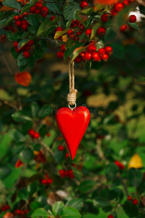 垂悬在一棵树的红色木心脏用红色莓果 免版税库存图片