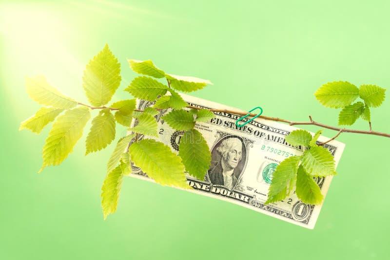 垂悬在一棵绿色树的分支的美元 免版税库存图片