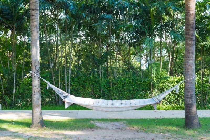 垂悬在两棵棕榈树之间的空的白色吊床在有绿色领域的庭院里在海滩附近 免版税库存照片