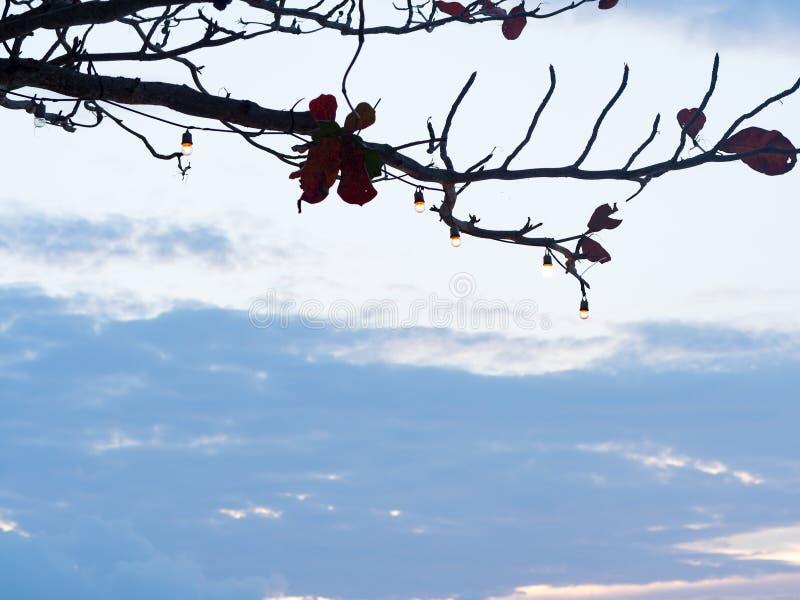 垂悬在剪影分支树的电灯泡反对与天空蔚蓝和白色云彩背景 免版税库存照片