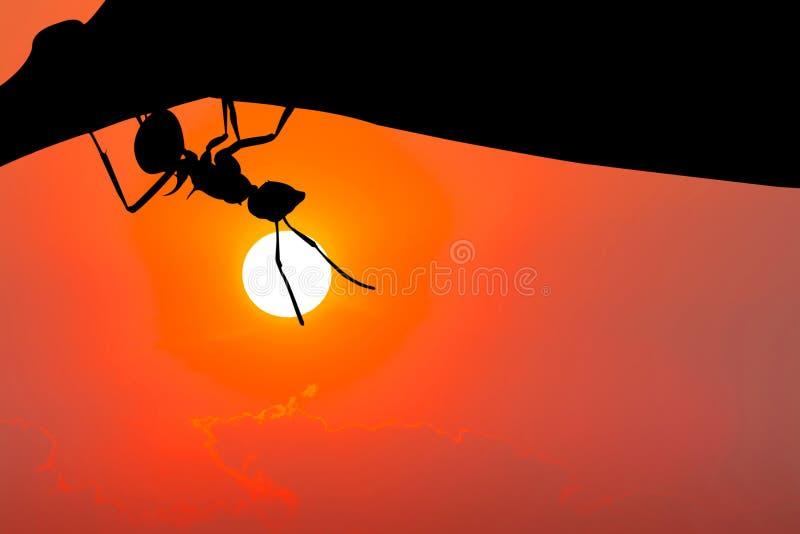 垂悬在叶子的蚂蚁剪影 这有裁减路线 免版税库存图片