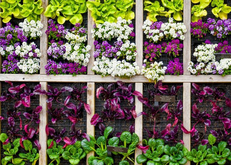 垂悬在墙壁上的菜园 免版税图库摄影