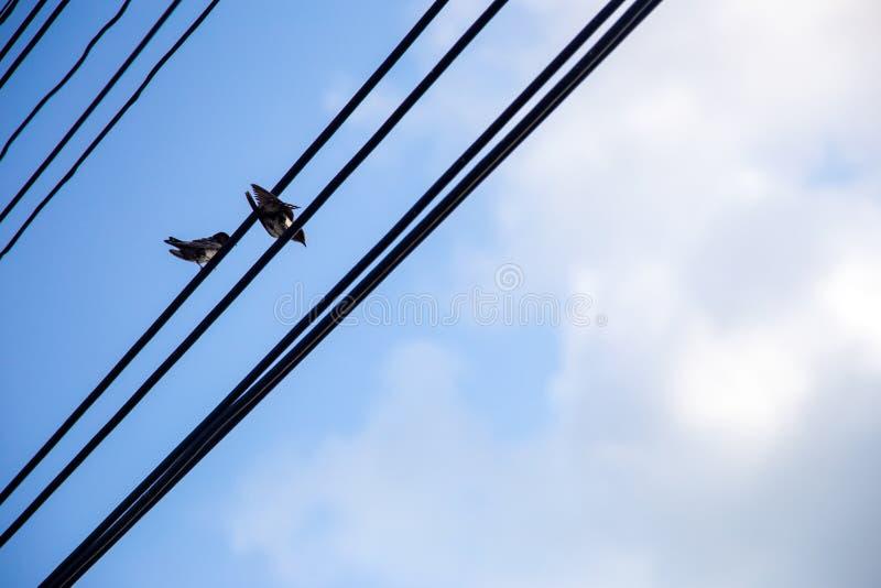 垂悬在天空蔚蓝背景的电线的鸟 免版税库存图片
