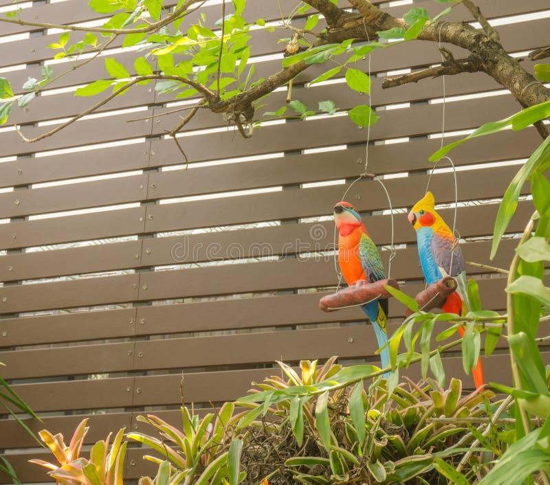 垂悬在庭院树的金刚鹦鹉玩偶在庭院墙壁附近 图库摄影