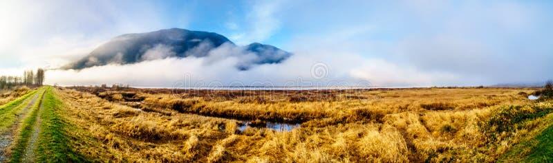垂悬在彼特河和彼特Addington沼泽的雾全景在彼特开拓地在枫树岭附近在不列颠哥伦比亚省,加拿大 免版税库存照片