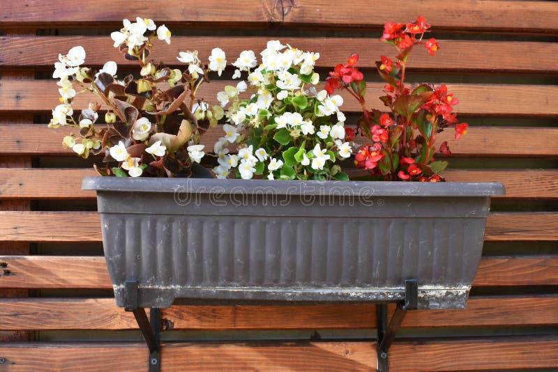 垂悬在木墙壁上的盆的花 库存图片