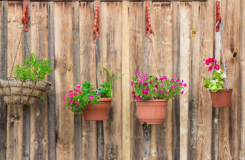 垂悬在木墙壁上的美丽的盆的花 库存图片