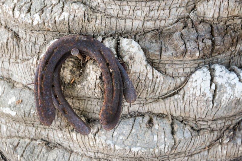 垂悬在树干,运气标志的三副老生锈的马掌 库存图片
