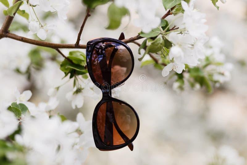 垂悬在树的布朗太阳镜 库存图片