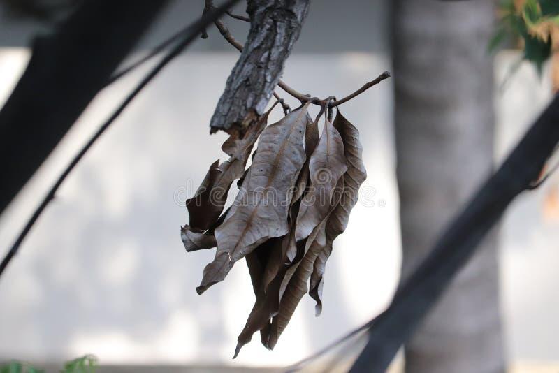 垂悬在树的秋天叶子 免版税图库摄影