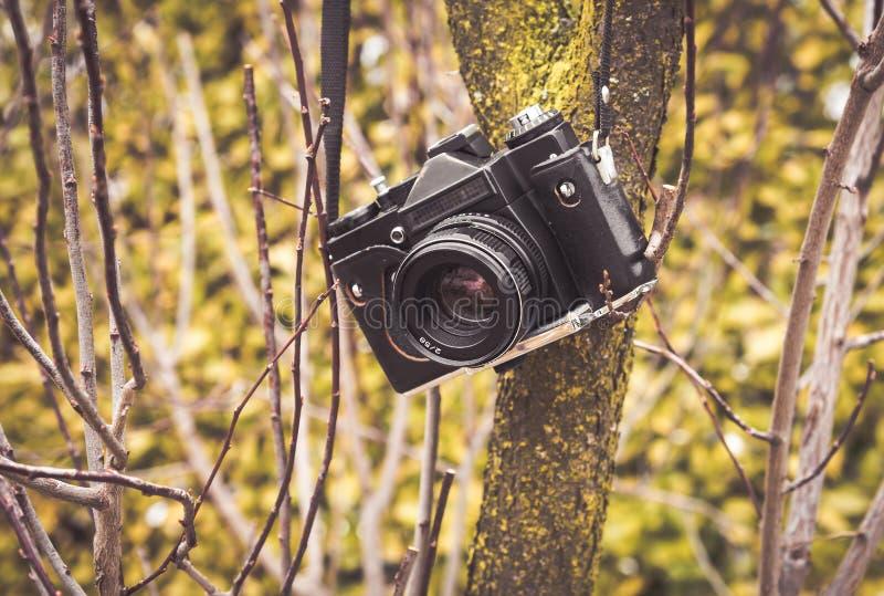 垂悬在树的老模式照相机 库存照片