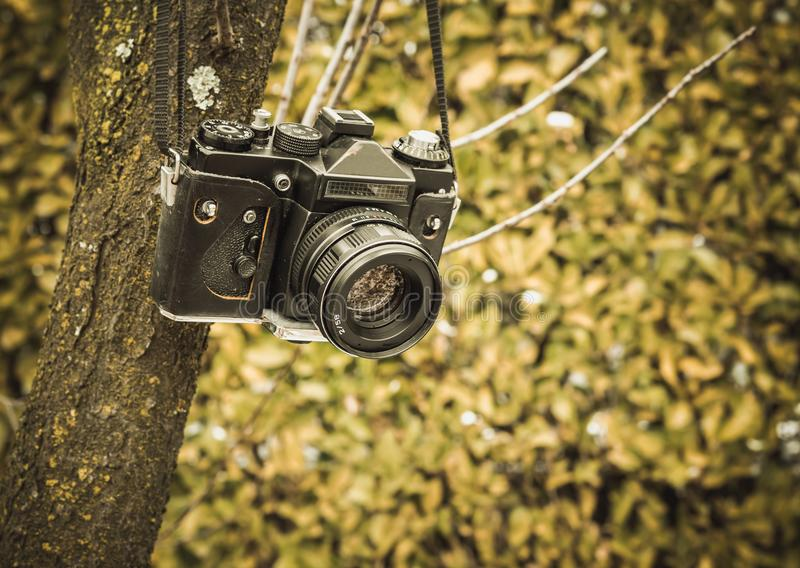 垂悬在树的老模式照相机 库存图片