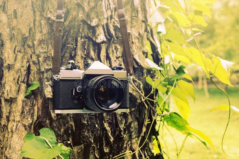 垂悬在树的老照相机 库存照片