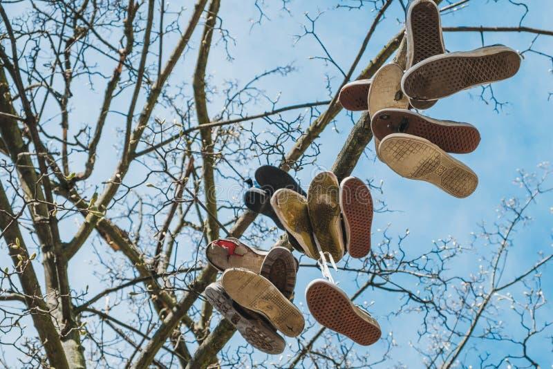 垂悬在树的鞋子,在树使用了运动鞋 库存图片