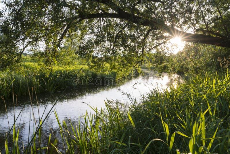 垂悬在河的树 库存照片