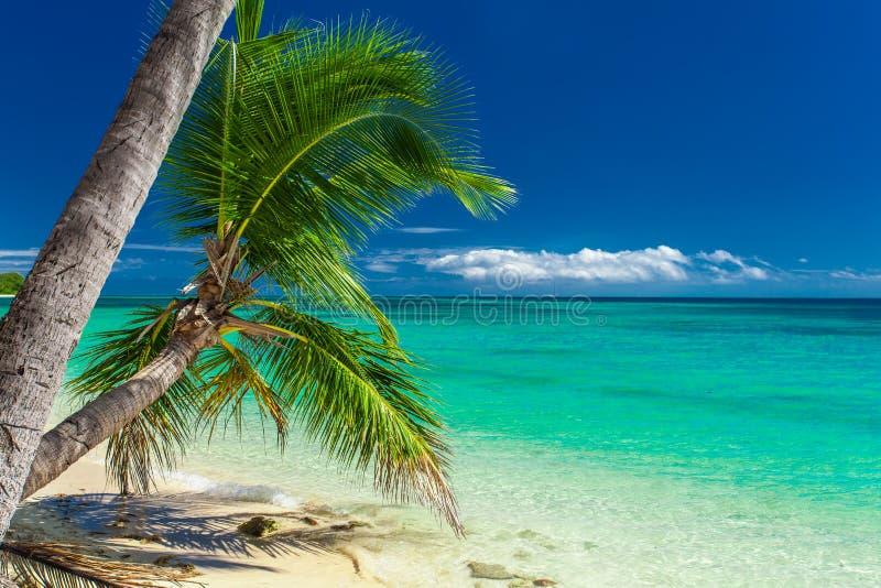 垂悬在热带海滩的棕榈树在斐济 免版税库存图片
