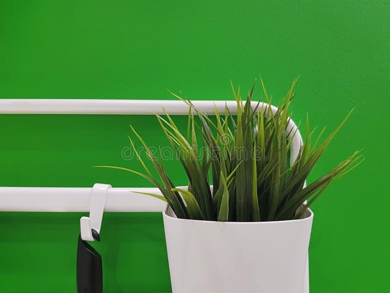 垂悬在白色机架的小盆的植物对绿色墙壁 免版税库存照片