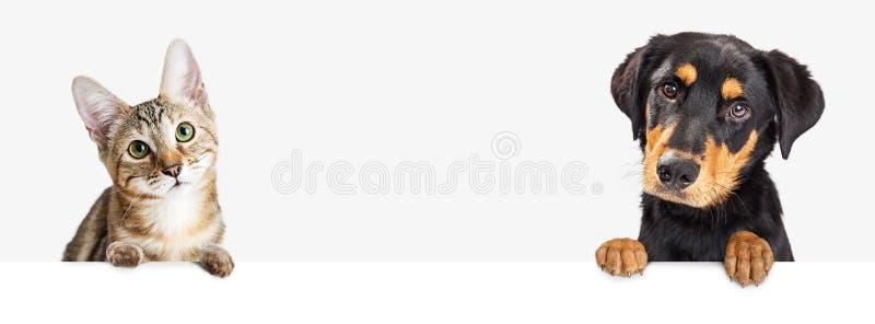 垂悬在白色网横幅的小猫和小狗 免版税库存图片