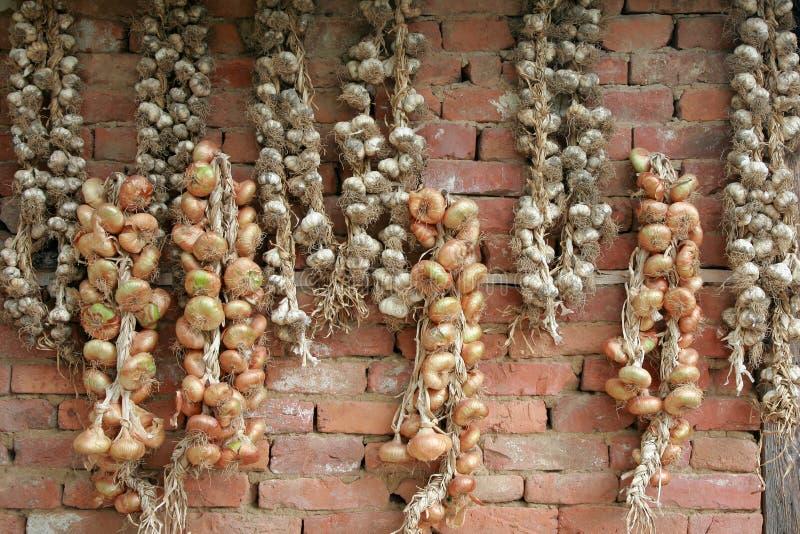 大蒜和葱 免版税库存照片