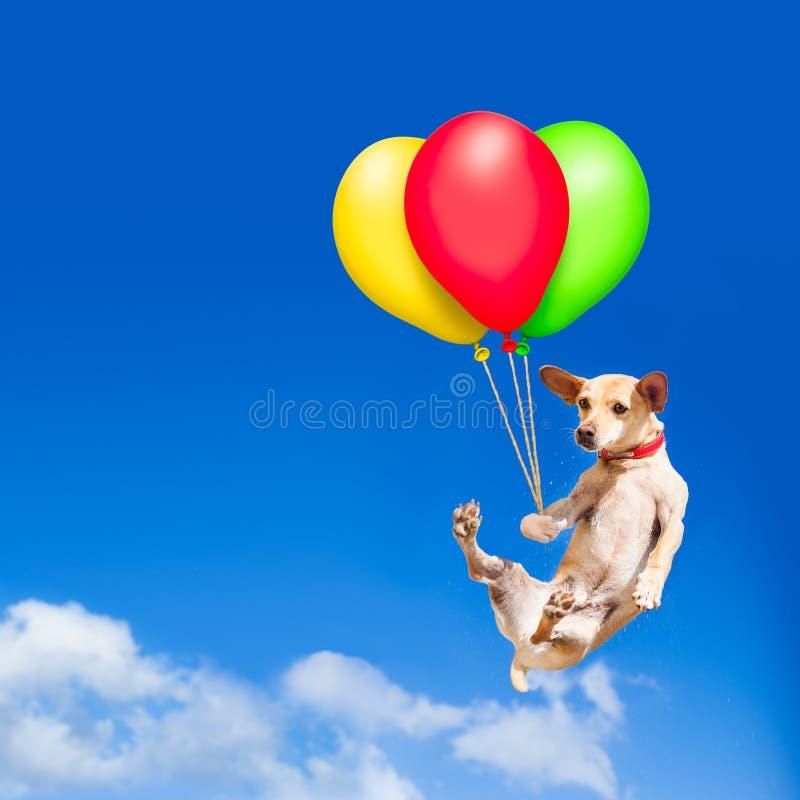 垂悬在空气的气球的狗 库存图片