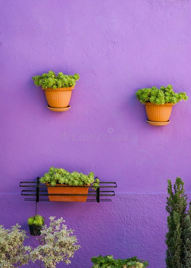 垂悬在紫罗兰色墙壁,绿色花构成上的花盆 免版税图库摄影