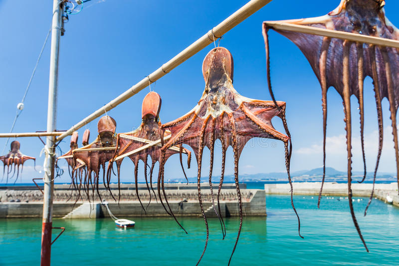 垂悬在Amakusa海岸,熊本P的竹子的各式各样的章鱼 免版税图库摄影