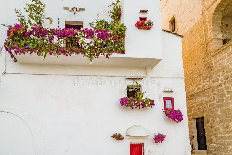 垂悬的喇叭花在南意大利 库存图片