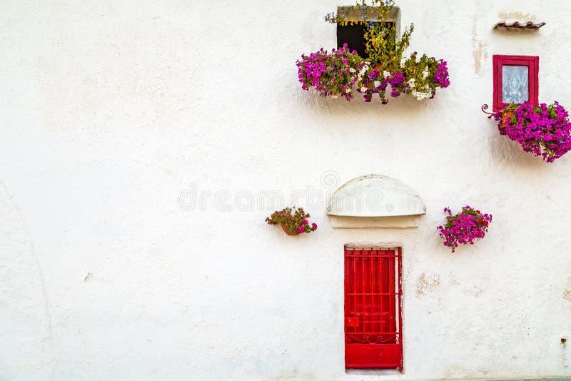 垂悬的喇叭花在南意大利 免版税库存照片
