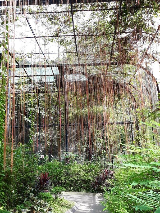 垂悬的藤庭院 免版税库存图片
