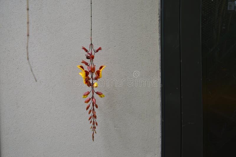 垂悬红色在莱顿hortus botanicus的一朵黄色花荷兰 免版税库存图片
