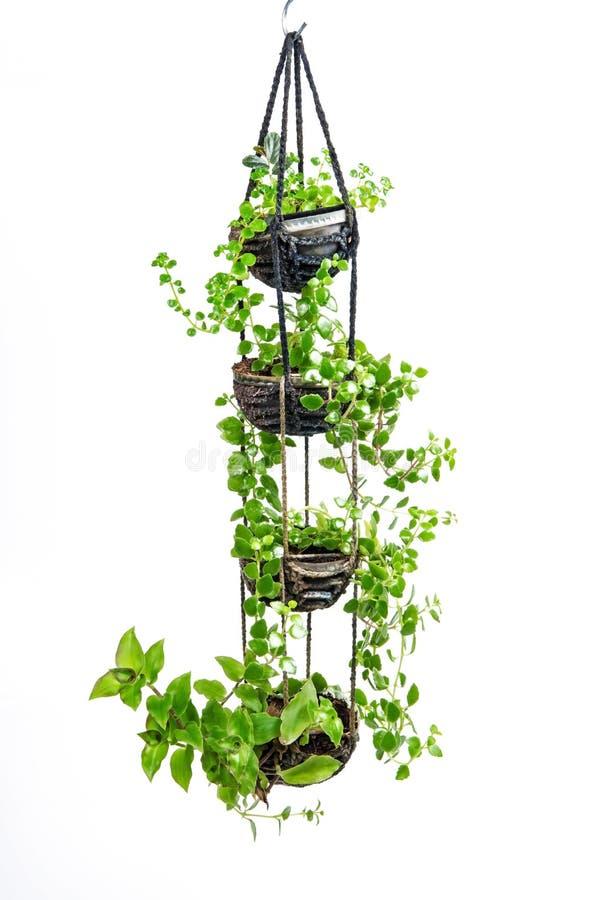 垂悬议院的植物,钩针编织工作 免版税图库摄影