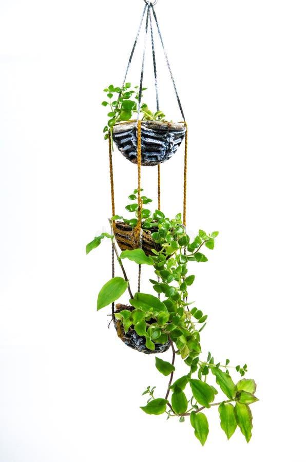 垂悬议院的植物,钩针编织工作 免版税库存照片