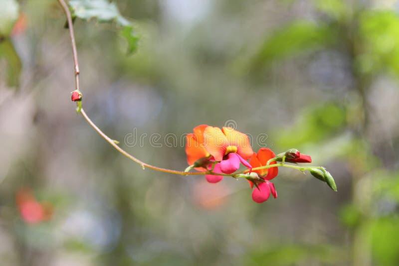 垂悬黄色和橙色花 库存照片