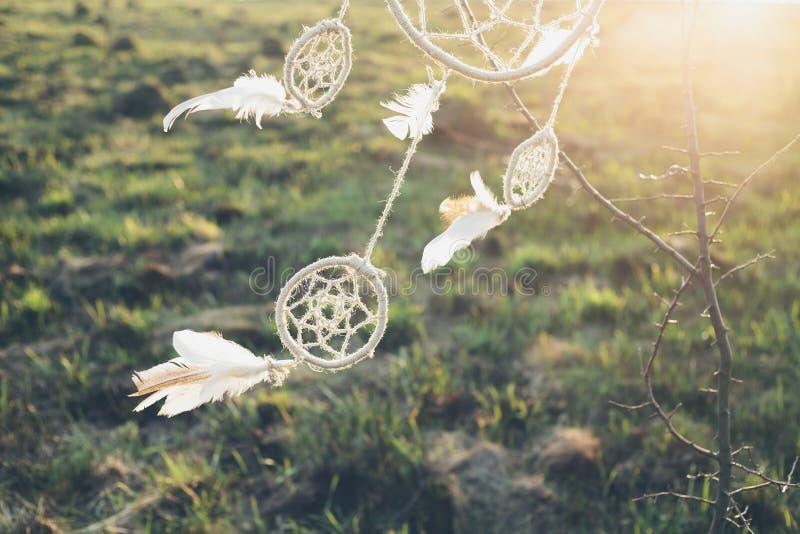 垂悬从在领域的一棵树的Dreamcatcher在日落 库存照片