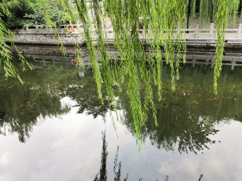 垂柳无危险是被反射的泉水 免版税库存照片