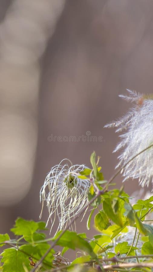 垂直的关闭有在一好日子观看的白花的充满活力的绿色植物 图库摄影