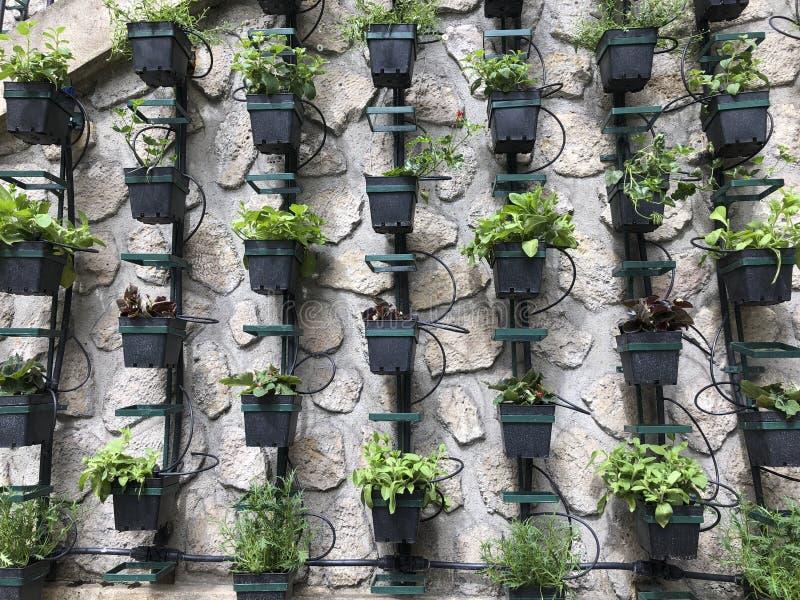 垂直的微药草园 库存照片
