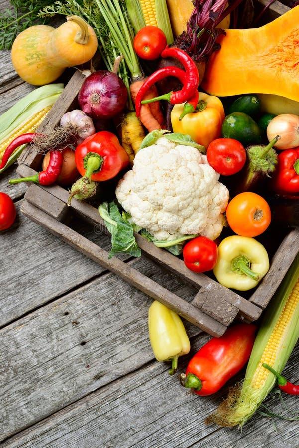 垂直的未加工的有机套新鲜蔬菜在树木繁茂的箱子背景中 从庭院的秋天收获 免版税图库摄影