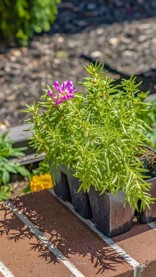 垂直的框架接近有鲜绿色的叶子和明亮的花的植物在一好日子 图库摄影