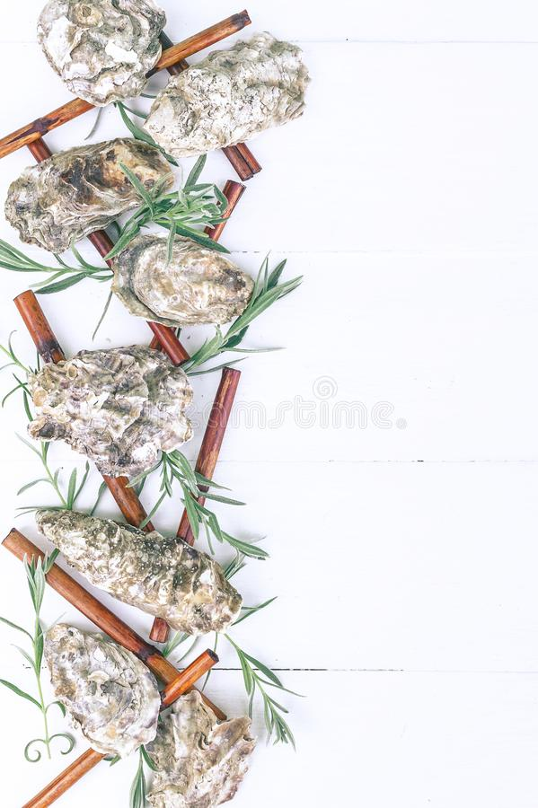 垂直的温泉横幅 蚝壳,海小卵石,干燥竹子,在木白色背景的年轻新芽 库存图片