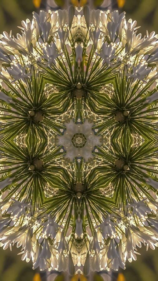 垂直的由反射的白花做的圆顶环形轧材在Calfiornia 库存照片